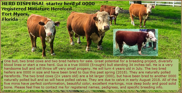 Fort Myers Florida 0000 Miniature Hereford Dispersal starter herd