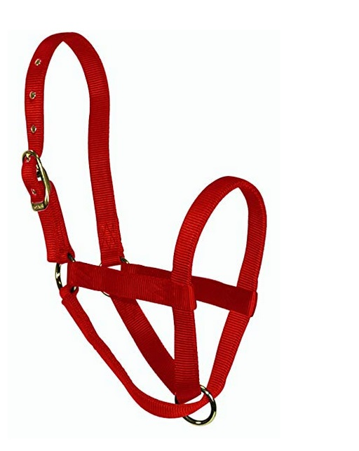 nylon calf halter made by hamilton