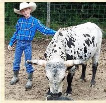 miniature milk cow