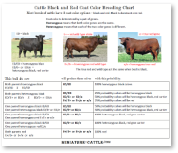 coat color (CC) in cattle