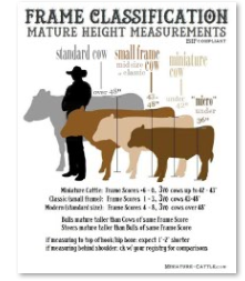 free printable frame size comparison chart for cattle for printing