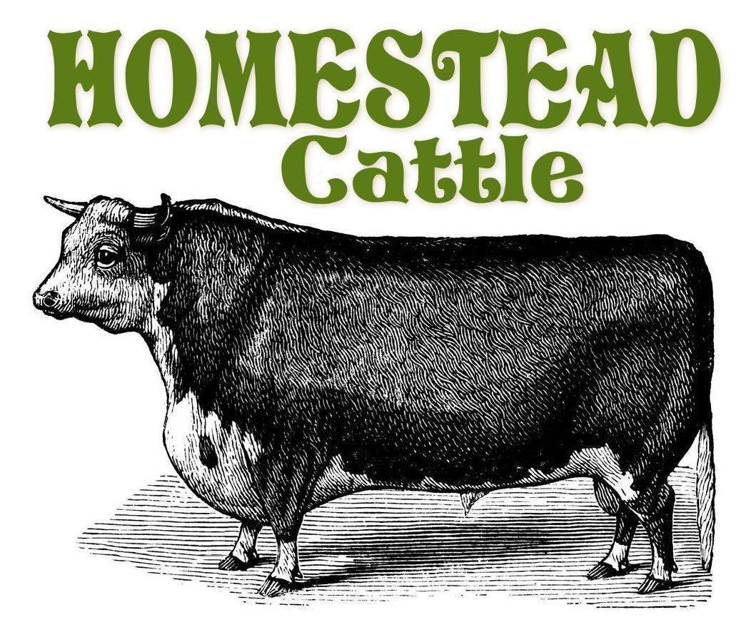 Homestead Cattle