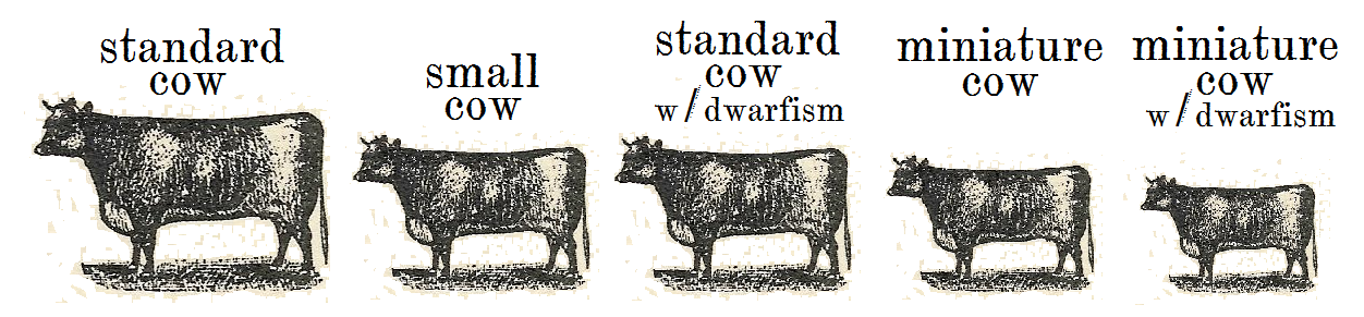 homestead breeds cow size comparisons