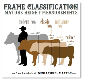 height classifications