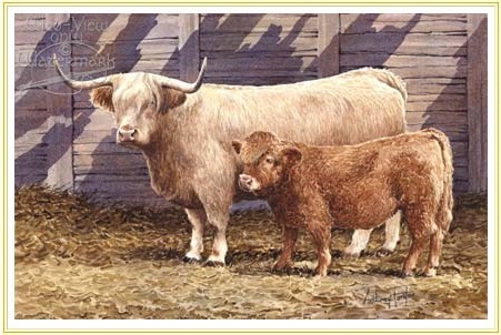 Miniature Cattle for Sale