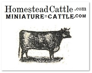 homestead & miniature cattle sire directory