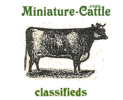 Homestead Cattle Classifieds