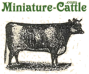 free classified ads on Miniature-Cattle.com