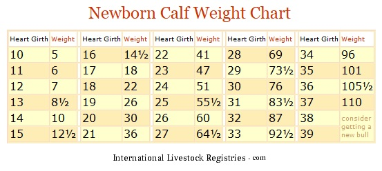 newborn calf weight chart