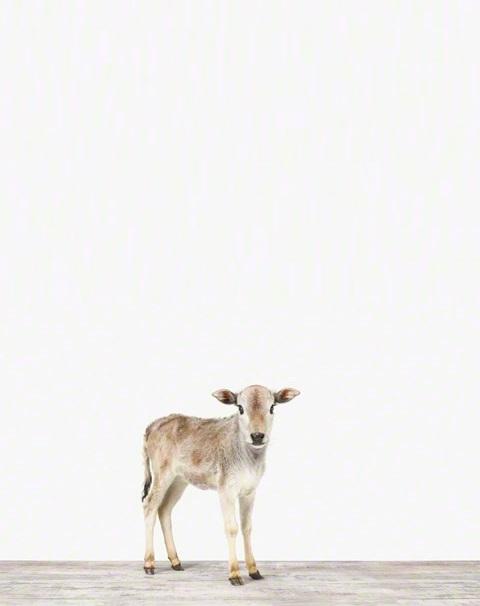 Miniature Cattlecom