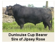 DunLouise Cup Bearer, Pure Scotch Angus Embryos (Native Origin Angus)